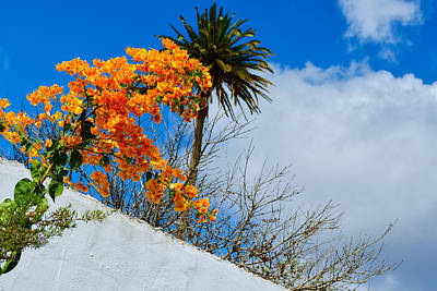 Martini Royalty-Free and Rights-Managed Images - Bougainvillea by Mark J Dunn