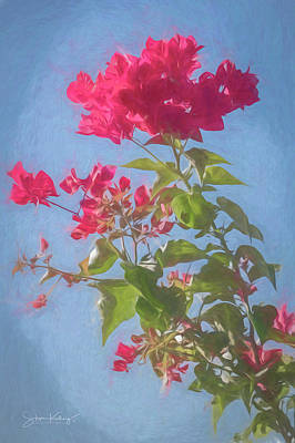 Digital Art - Bougainvillea Morning by Steve Kelley