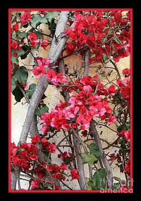 Bougainvillea Leaves Photograph - Bougainvillea On Mission Wall - Digital Painting by Carol Groenen