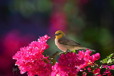 Photograph - Bougainvillea Visitor by Marilyn Smith