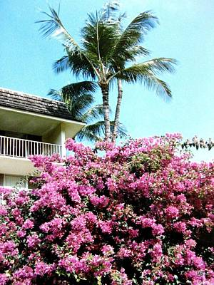 Photograph - Bougainvillea by Will Borden