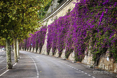 Vines Photograph - Bougainvilleas In Villefranche-sur-mer by Elena Elisseeva