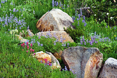 Photograph - Boulder Blooms by Marla Craven