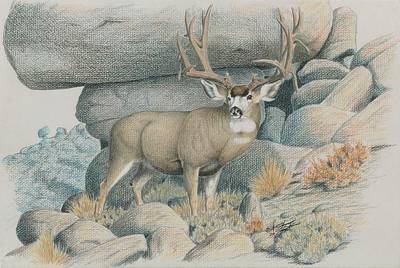 Drawing - Boulder Buck  by Darcy Tate