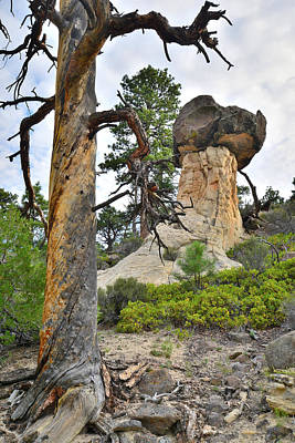 Photograph - Boulder Mountain by Ray Mathis