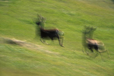 Gaiting Photograph - Bounding Gait by Soli Deo Gloria Wilderness And Wildlife Photography