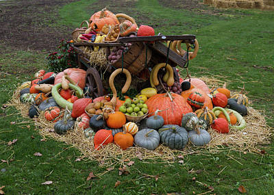 Photograph - Bountiful Harvest L by Shirley Mitchell