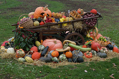 Photograph - Bountiful Harvest Ll by Shirley Mitchell