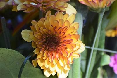 Photograph - Bouquet 1 by John Glass
