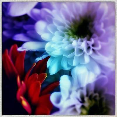 Photograph - Bouquet by Anne Thurston