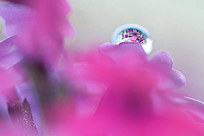 Photograph - Bouquet In A Drop by Lisa Knechtel