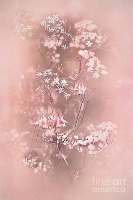 Cow Parsley Wall Art - Photograph - Bouquet In Pastel Pink by Liz Alderdice