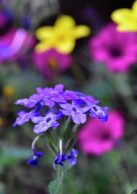Photograph - Bouquet by Jeffrey PERKINS