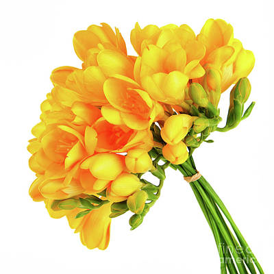 Photograph - Bouquet Of A Beautiful Yellow Flowers by Anna Om