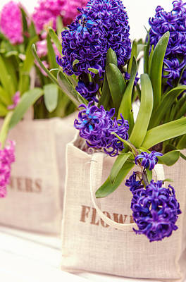 Photograph - Bouquet Of Blue Hyacinths  by Jenny Rainbow