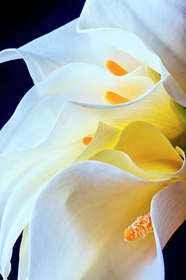 Photograph - Bouquet Of Calla Lilies by Garry Gay