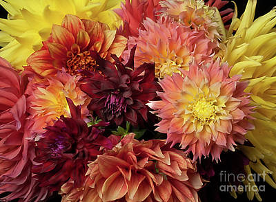 Photograph - Bouquet Of Dahlias From The Garden by Ann Jacobson