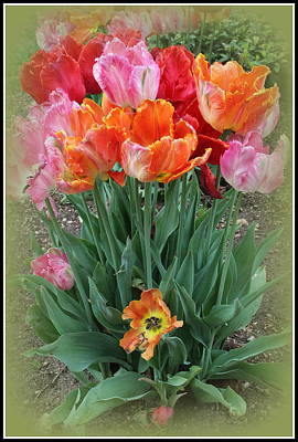 Bouquet Of Colorful Tulips Art Print