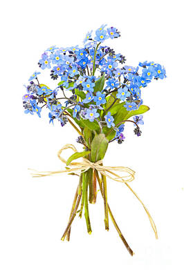 Floral Royalty-Free and Rights-Managed Images - Bouquet of forget-me-nots by Elena Elisseeva