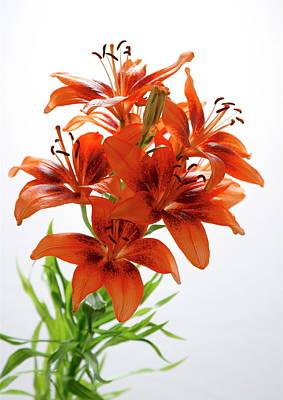 Painting - Lilies by Masha Batkova
