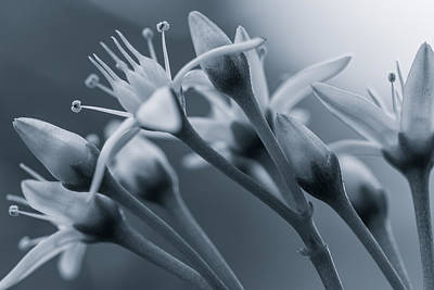 Photograph - Bouquet Of The Jade Blossoms Bw by Jonathan Nguyen
