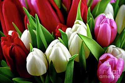 Photograph - Bouquet Of Tulips 122217-2 by Ray Shrewsberry