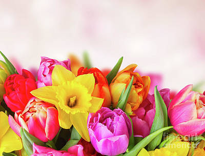 Photograph - Tulips And Daffodils by Anastasy Yarmolovich