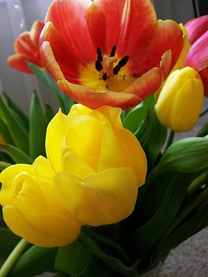 Photograph - Bouquet Of Tulips  by Sharon Duguay