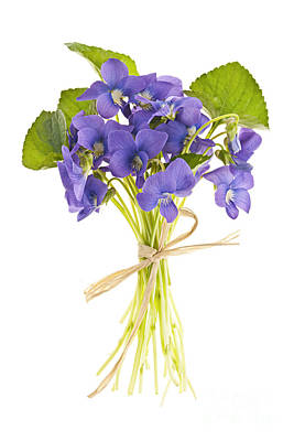 Floral Royalty-Free and Rights-Managed Images - Bouquet of violets by Elena Elisseeva