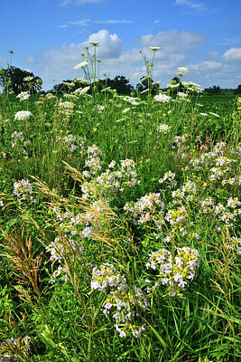 Photograph - Bouquet Of Wildflowers Along Country Road In Mchenry County by Ray Mathis