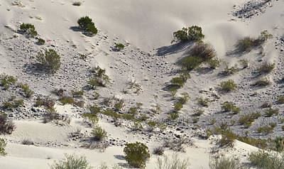 Photograph - Bouquillas Canyon Dunes by Nadalyn Larsen