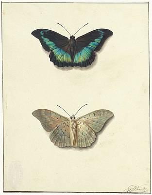Boven En Onderaanzicht Van Een Vlinder Art Print by Johannes