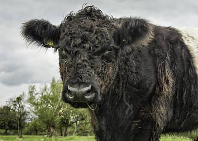 Sottish Photograph - Bovine Beauty 2 by Wendy Chapman