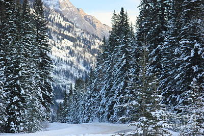 Photograph - Bow Valley Parkway In Winter by Wilko Van de Kamp