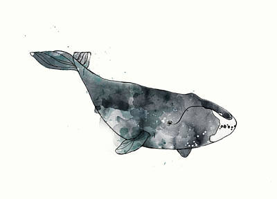 Whale Mixed Media - Bowhead Whale From Whales Chart by Amy Hamilton