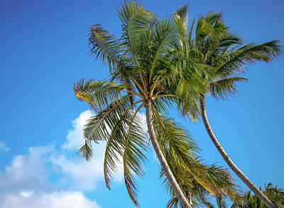 Photograph - Bowing Palm Trees And Blue Sky by Jenny Rainbow