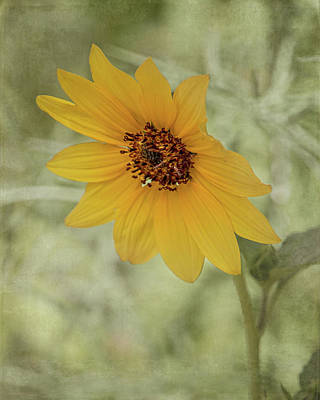 Photograph - Bowing To The Sun by Teresa Wilson