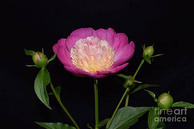Photograph - Bowl Of Beauty With Buds by Jeannie Rhode