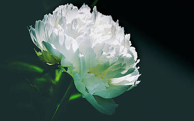Photograph - Bowl Of Cream Peony by Julie Palencia