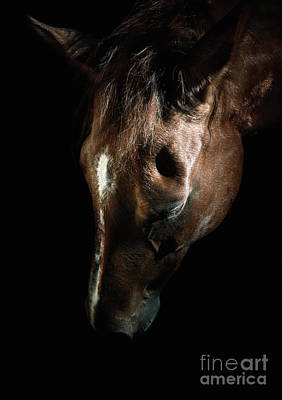 Photograph - Bown Horse Portrait by Dimitar Hristov