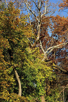 Photograph - Bows And Branches by Cate Franklyn