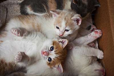 Cardboard Photograph - Box Full Of Kittens by Garry Gay