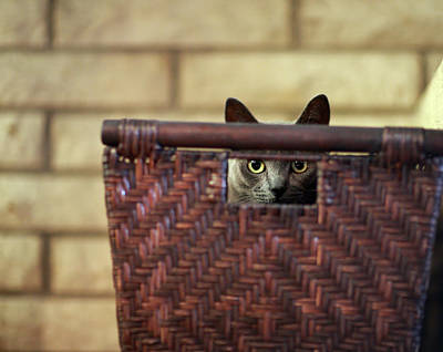Photograph - Box Kitty by Mike Reid