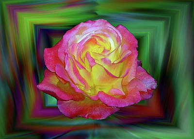 Digital Art - Boxed Rose by Max DeBeeson
