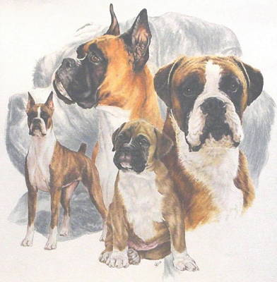 Drawing - Boxer And Ghost by Barbara Keith