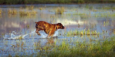Photograph - Boxer Dog Playing In The Water by Elenarts - Elena Duvernay photo