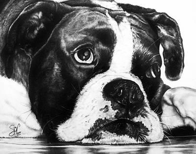 Cute Boxer Drawing - Boxer Dog by Sherri Mull