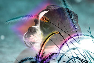 Photograph - Boxer In The Weeds by Ericamaxine Price