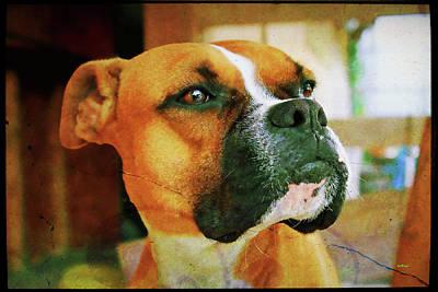 Boxer Dog Digital Art - Boxer Pose by KJ DePace