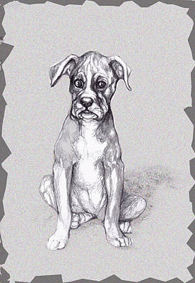 Pencil Drawing Mixed Media - Boxer Pup by Peggy Wilson